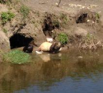 Сплав по реке Пахра на каяках